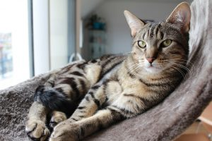 cat-1368219_960_720