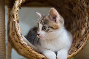 cat-1373895_960_720