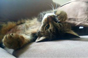 cat-1375469_960_720