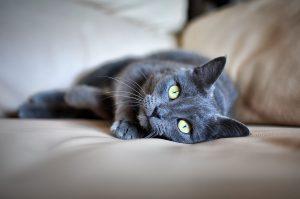cat-1377984_960_720