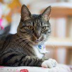 猫がいる家で掃除機をかける頻度は?きれいにするコツとは!