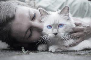 cat-1423844_960_720