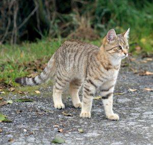 cat-490283_1280