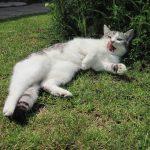 猫の舌に黒い斑点がある!病気とそうでない場合の違いとは?