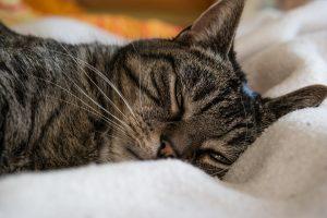 cat-648136_960_720
