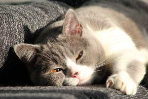 cat-916044_960_720