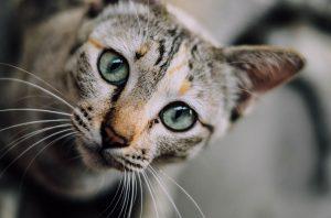 cat-face-1081951_960_720
