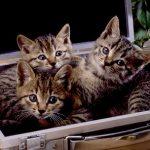 雑種の猫の値段はどれくらい?ペットショップで買えるの?