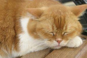 cat0052-039