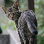 猫が尿路結石になった!治療費や手術代にはいくらかかる?