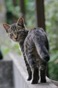 cat0084-066