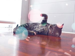 cats-633070_960_720