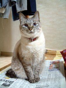 猫の柄 シャムネコミックス