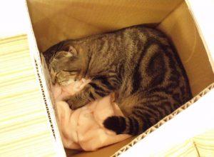 猫 出産10