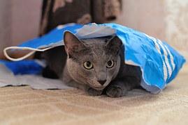 猫 なつく18