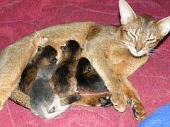 猫 出産6