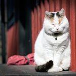 猫が糖尿病になると後ろ足に異変がある!?見分け方とは?