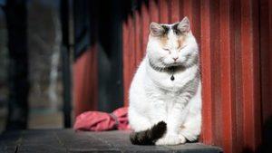 猫の柄 トビミケ1