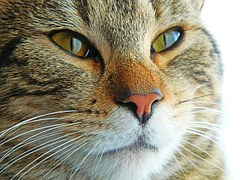 猫 なつく9