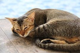 猫 玉ねぎ13