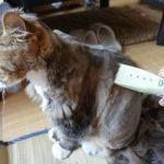 猫のトリミング!バリカンでプロ並みに自宅で刈る方法とは?