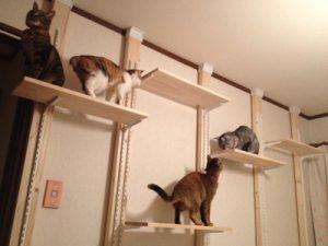 猫 自傷行為15