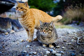 猫 出産3