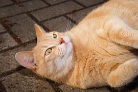 猫のさかり1