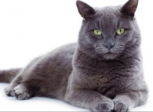 猫の柄 グレー1