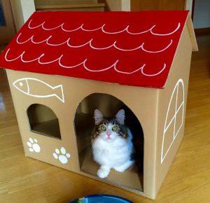 猫 誕生日17