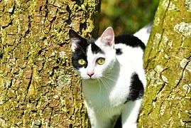 猫の柄 シロクロトビ1
