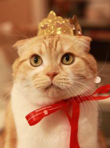 猫 誕生日6