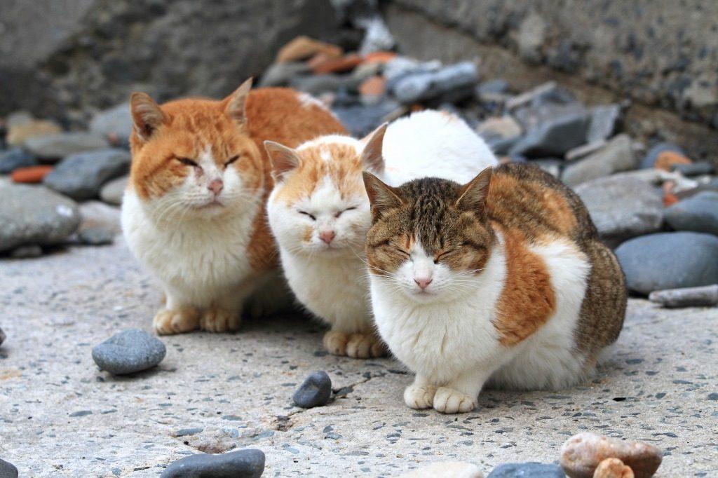 猫の柄 いろいろ