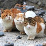 猫の人気の柄を一覧で紹介!飼うのにおすすめの種類は?