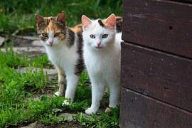 猫の柄 キャッチ画像
