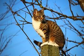 猫 自傷行為4