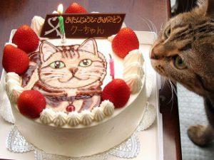 猫 誕生日8