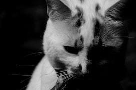 猫のしつけ 正しい方法4