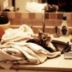 猫がシャンプーを嫌がる時の対処法!お風呂って絶対に必要?