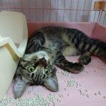 猫のトイレ!砂の飛び散り対策におすすめな方法をご紹介