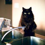 猫が水をこぼすのはわざと?飲まない時の対処法とは!?