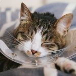 猫の去勢!術後は下痢をしたり吐くって本当?対処法は?