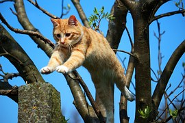 猫 旅行8