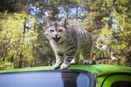 猫 旅行1