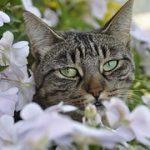 猫がユリを食べた時の対処法!中毒ならどんな症状が出るの?