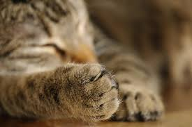猫 旅行24