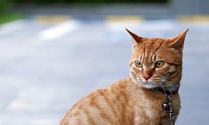 猫 旅行17