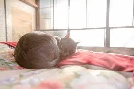猫 引っ越し1