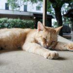 猫の末期癌はどんな症状?食事を嫌がる時の対処法を紹介!
