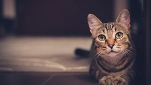 猫 避妊手術 費用12